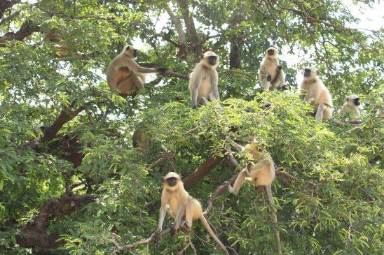 monkeys on tree